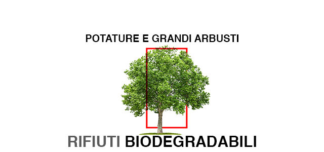 Smaltimento-biodegradabili-materiale-verde